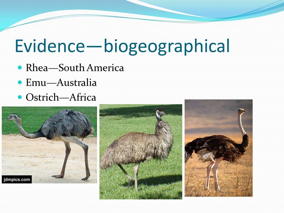 Evidence—biogeographical Rhea—South America Emu—Australia Ostrich—Africa