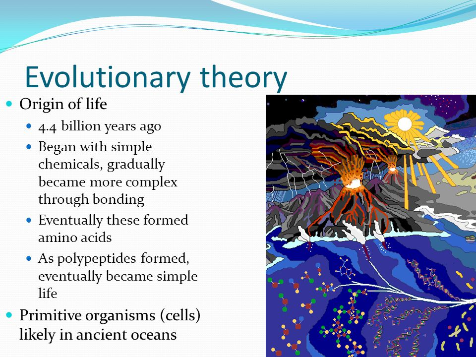 Evolutionary theory Origin of life 4.4 billion years ago Began with simple chemicals, gradually became more complex through bonding Eventually these f