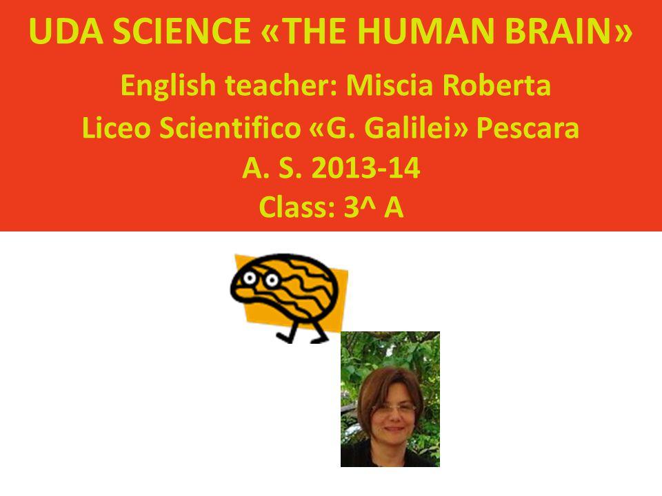 UDA SCIENCE «THE HUMAN BRAIN» English teacher: Miscia Roberta Liceo Scientifico «G.