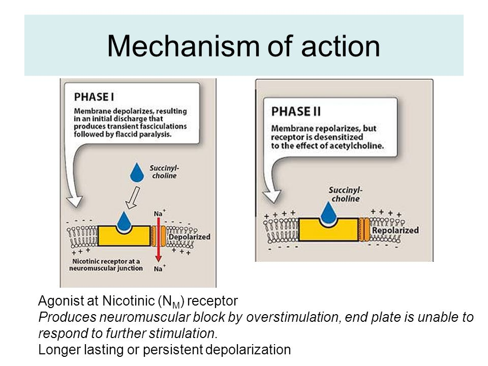 Mechanism of action Agonist at Nicotinic (N M ) receptor Produces neuromuscular block by overstimulation, end plate is unable to respond to further st