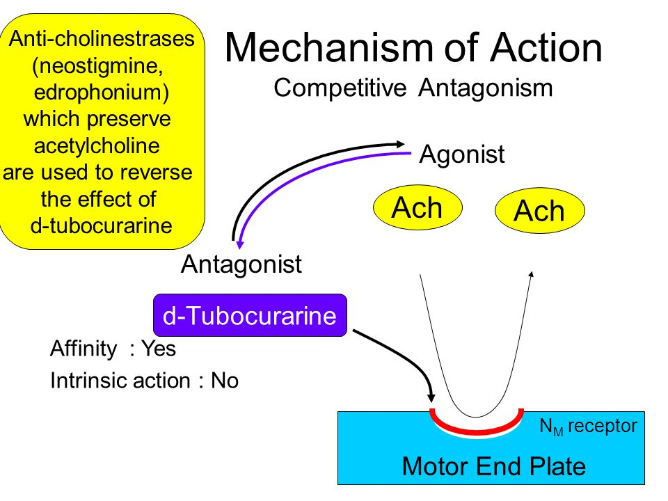 Mechanism of Action Competitive Antagonism Ach Agonist d-Tubocurarine Antagonist Motor End Plate Anti-cholinestrases (neostigmine, edrophonium) which preserve acetylcholine are used to reverse the effect of d-tubocurarine Affinity : Yes Intrinsic action : No N M receptor