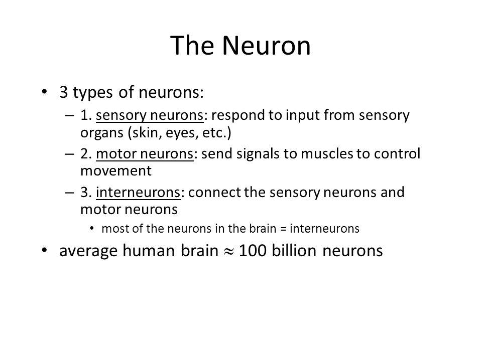 The Nervous System autonomic nervous system: controls many of the self-regulatory functions of the body (e.g.