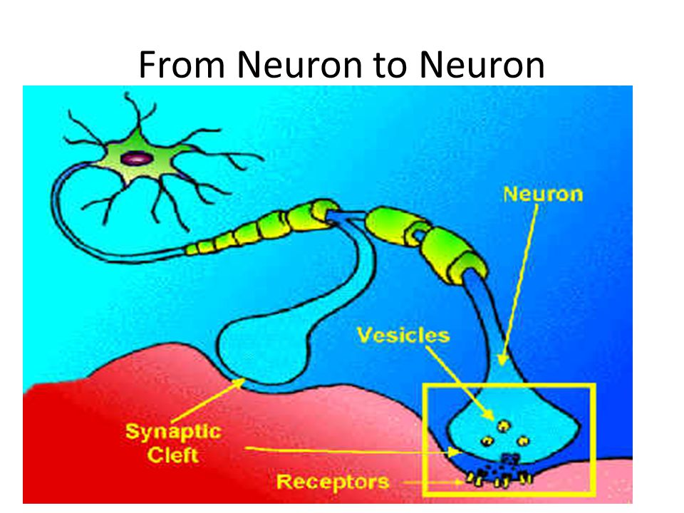 neurotransmitters: a chemical that sends signals from one neuron to another over the synapse