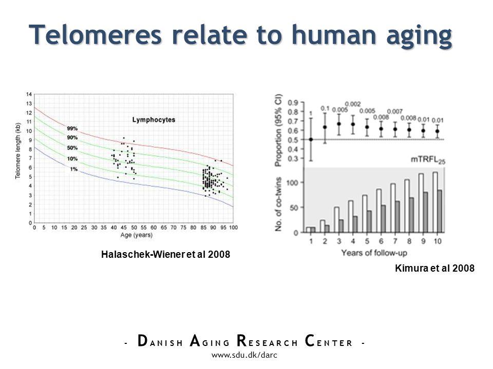 - D A N I S H A G I N G R E S E A R C H C E N T E R - www.sdu.dk/darc Telomeres relate to human aging Kimura et al 2008 Halaschek-Wiener et al 2008