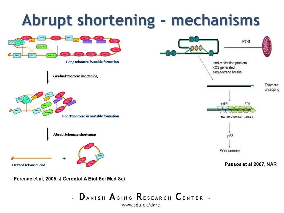 - D A N I S H A G I N G R E S E A R C H C E N T E R - www.sdu.dk/darc Abrupt shortening - mechanisms Passos et al 2007, NAR Ferenac et al, 2005; J Gerontol A Biol Sci Med Sci