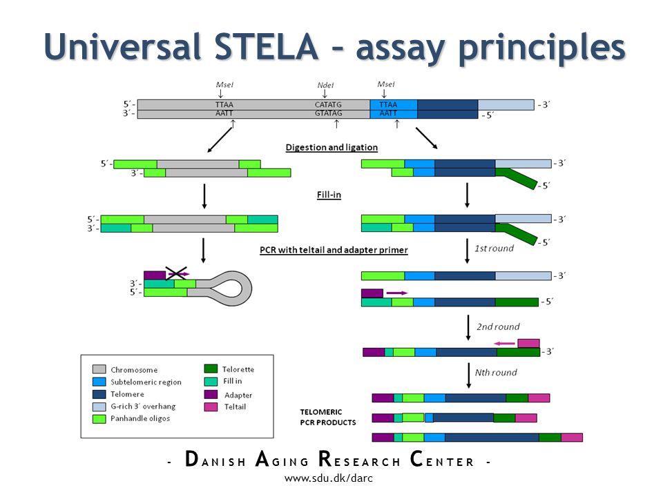 - D A N I S H A G I N G R E S E A R C H C E N T E R - www.sdu.dk/darc Universal STELA – assay principles Universal STELA – assay principles