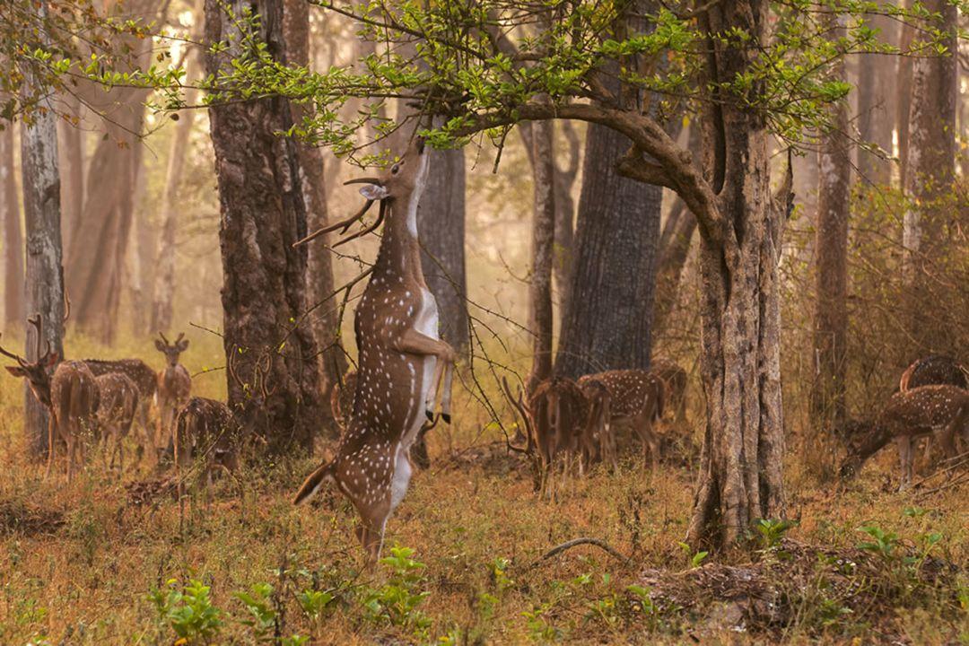 National park 'Sviati Hory' (Holy Mountains), Donetsk Oblast, Ukraine. nn