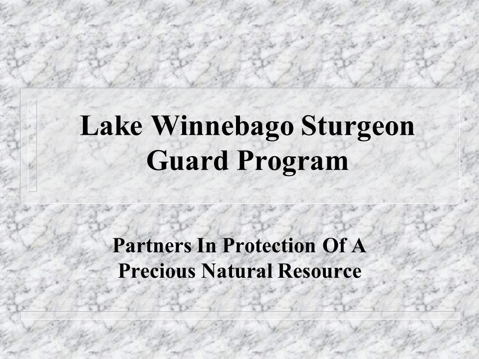 Goals For The Sturgeon Guard Program n Reduction Of Illegal Harvest Of Sturgeon n Increase Public Education and Awareness of the Lake Sturgeon n Support For Department Sturgeon Protection Efforts n Raise Awareness Of The Public In Issues Affecting The Entire Wolf River System