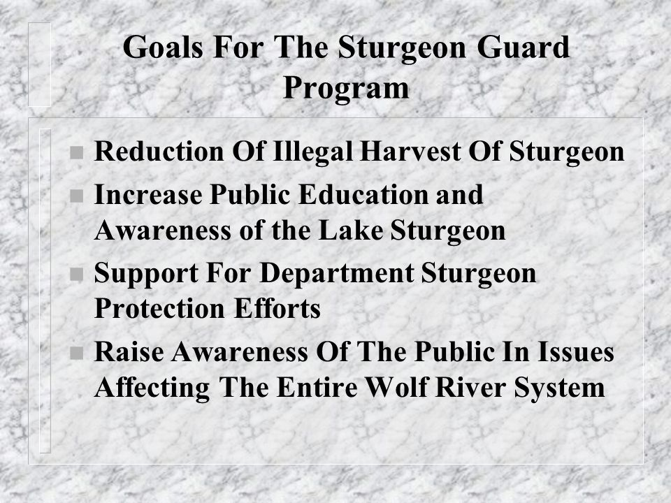 Illegal Harvest Of Sturgeon n There Is A Long History Of Illegal Harvest Of Sturgeon On The Wolf River n With The Construction of The Shawano Paper Company Dam Sturgeon Concentrated There n The Removal Of Sturgeon From The River Was Not Always Illegal