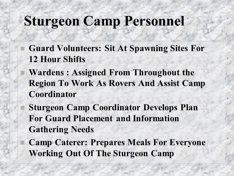 Sturgeon Camp Personnel n Guard Volunteers: Sit At Spawning Sites For 12 Hour Shifts n Wardens : Assigned From Throughout the Region To Work As Rovers