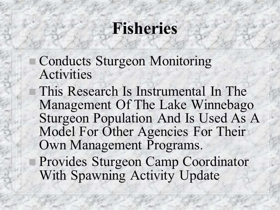 Fisheries n Conducts Sturgeon Monitoring Activities n This Research Is Instrumental In The Management Of The Lake Winnebago Sturgeon Population And Is