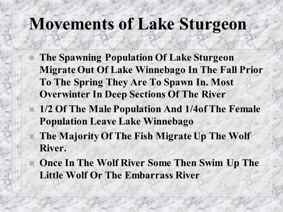Negative Pressures On All Sturgeon Species World Wide n Illegal World Wide Trade in All Species of Sturgeon Especially For Caviar n Large Population Declines Due To Destruction of Spawning Habitat, Dams, Pollution and Illegal Harvest n Political Turmoil Reducing or Eliminating Protection Programs By Nations n Lack of Awareness By The Public On Their Contributions To The Impacts On Sturgeon Through Purchase of Caviar Obtained Through Illegal Harvest n Limited Knowledge By Natural Resources Agencies Of Species Needs n Sturgeon Are Long Lived But Late Maturing Fish So Negative Impacts On Their Population Are Very Difficult To Overcome