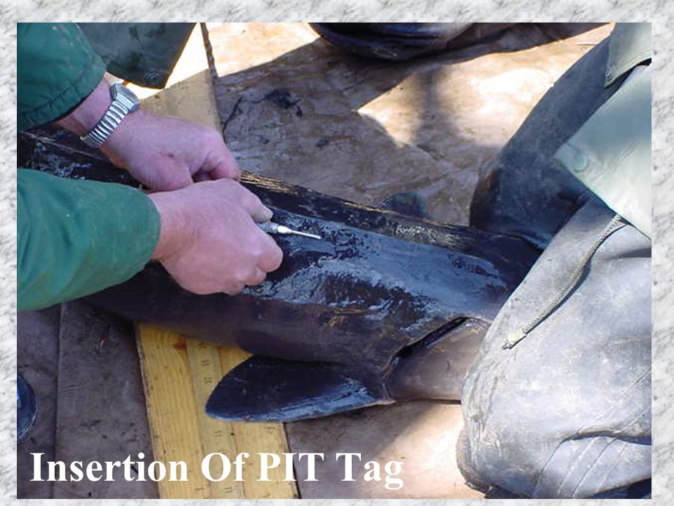 Insertion Of PIT Tag