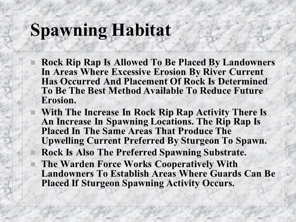 Spawning Sites n As New Rip Rap Sites are placed in the River They Are Diagrammed By The Field Warden On Spawning Site Maps n These Sites Are Numbered Sequentially From The Shawano Dam n There are >54 Sites Currently Documented n Several Of These Sites Include Multiple Areas Of Spawning Habitat