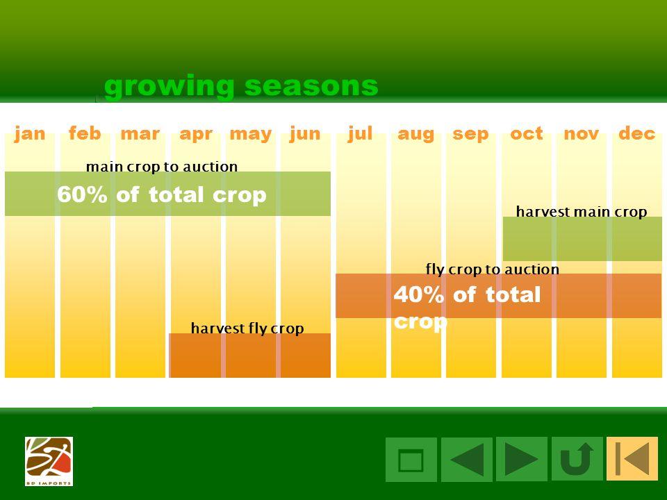 9 growing seasons janfebmaraprmayjunjulaugsepoctnovdec 60% of total crop main crop to auction harvest main crop harvest fly crop fly crop to auction 40% of total crop 