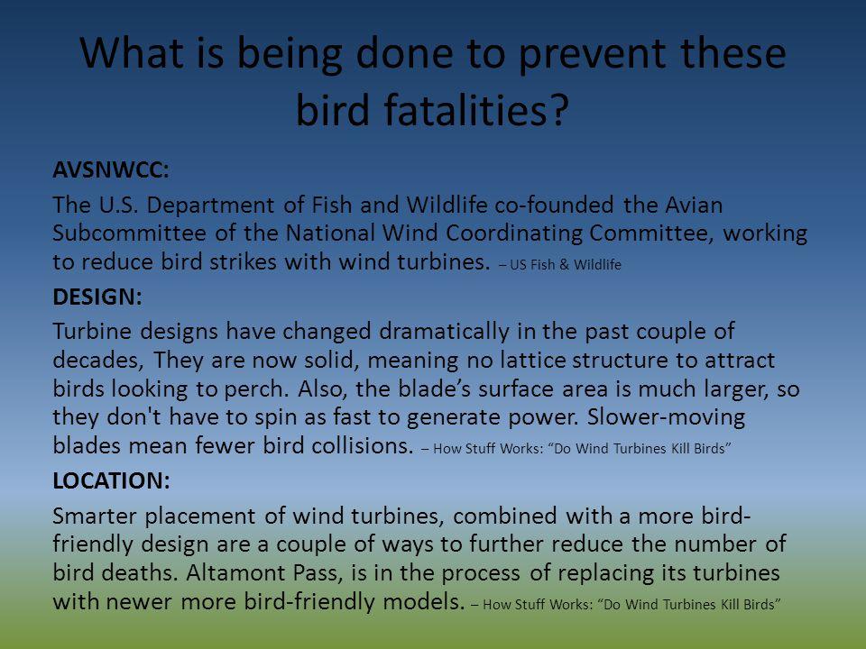 Wind turbines across the U.S. kill an estimated 33,000 migratory birds a year – U.S.