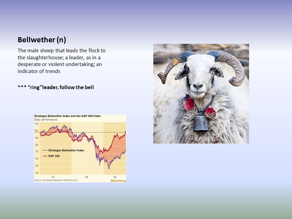 Bellwether (n) The male sheep that leads the flock to the slaughterhouse; a leader, as in a desperate or violent undertaking; an indicator of trends *** ring leader, follow the bell