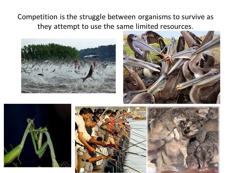 Competition is the struggle between organisms to survive as they attempt to use the same limited resources.
