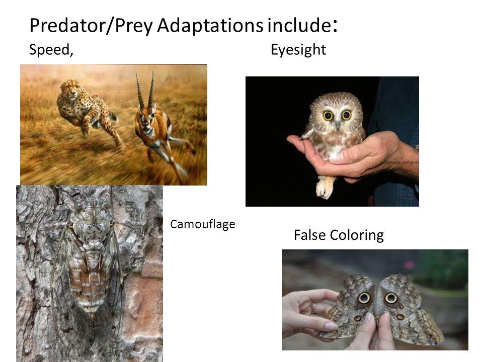 Predator/Prey Adaptations include : Speed, Eyesight False Coloring Camouflage