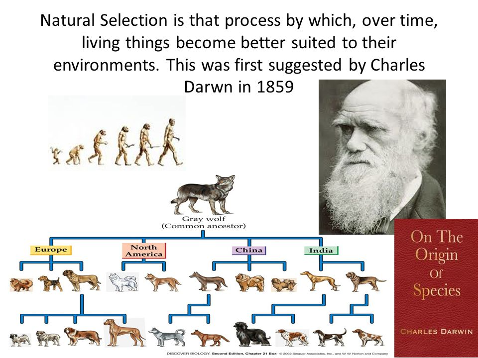 Natural Selection is that process by which, over time, living things become better suited to their environments. This was first suggested by Charles D