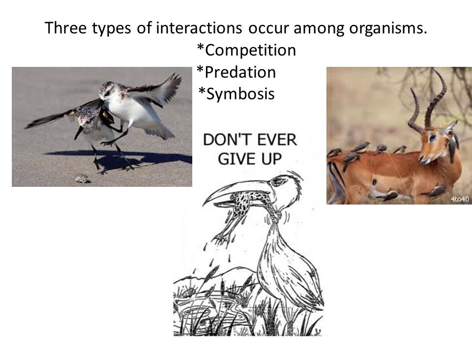 Three types of interactions occur among organisms. *Competition *Predation *Symbosis