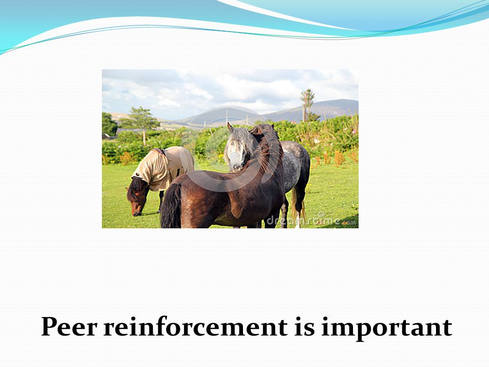 Peer reinforcement is important