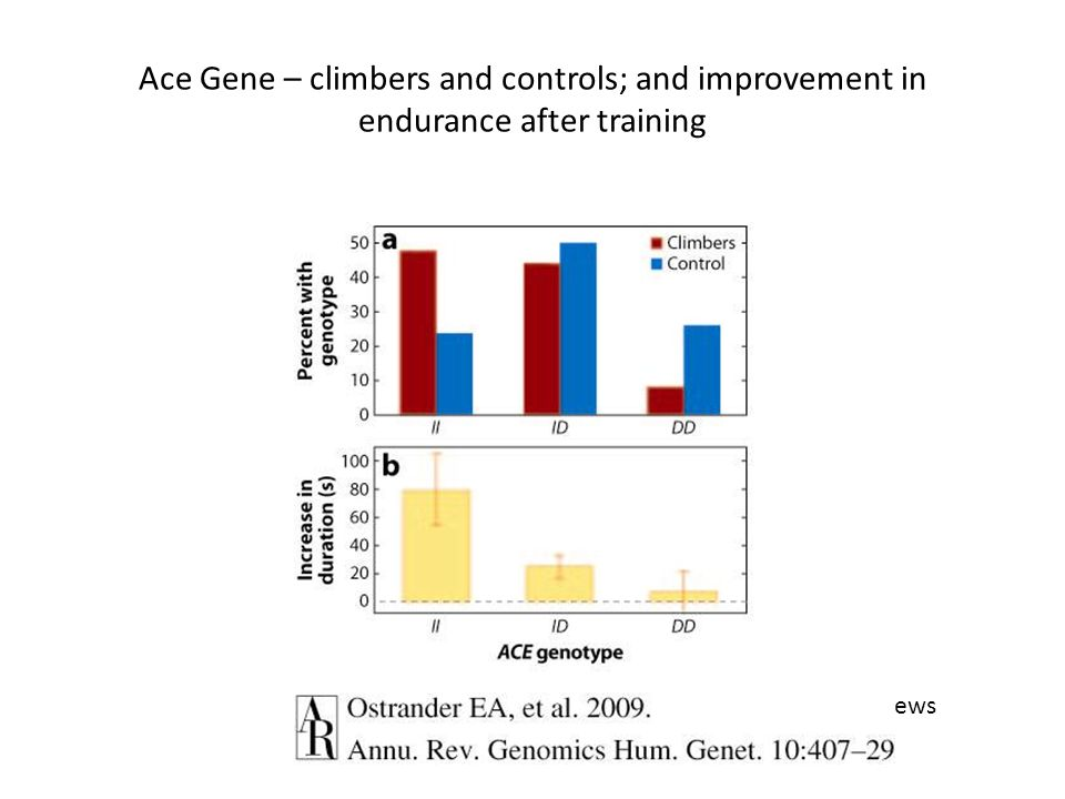 Annual Reviews Ace Gene – climbers and controls; and improvement in endurance after training