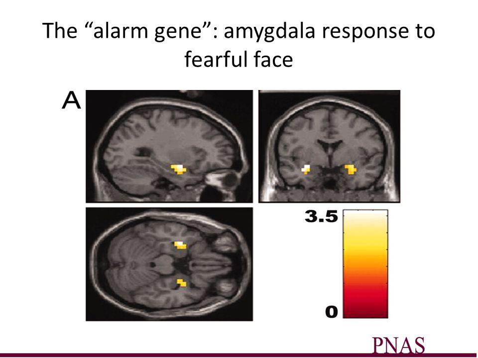 The alarm gene : amygdala response to fearful face