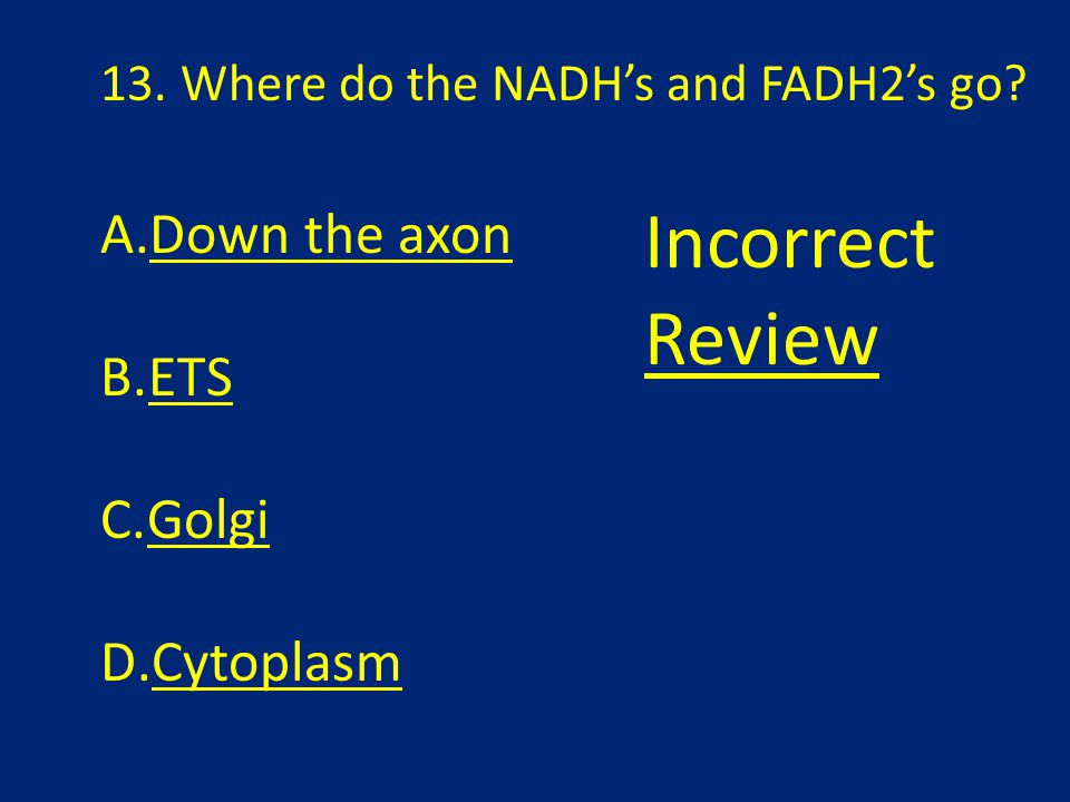 13. Where do the NADH's and FADH2's go? A.Down the axon B.ETS C.Golgi D.Cytoplasm Incorrect Review