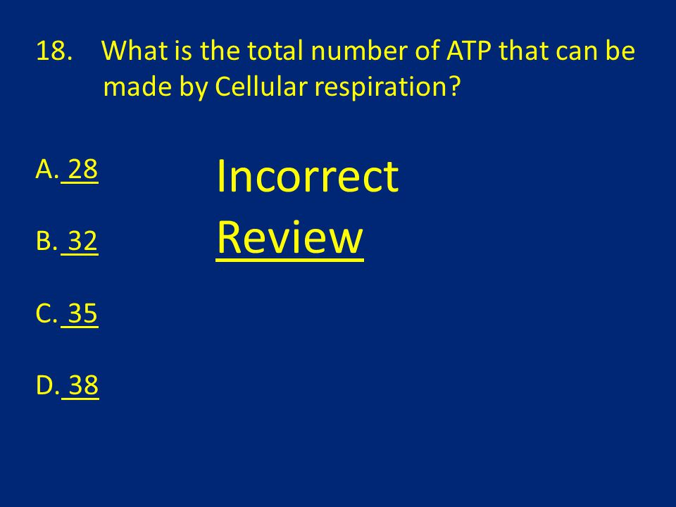 18.What is the total number of ATP that can be made by Cellular respiration.