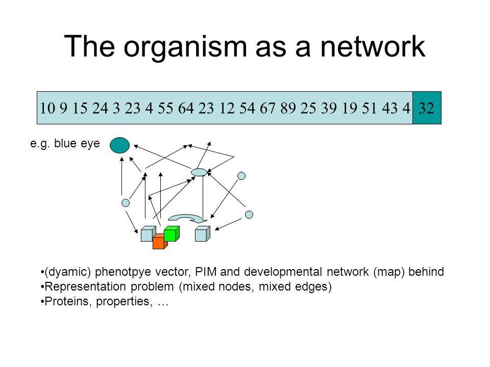 The organism as a network 10 9 15 24 3 23 4 55 64 23 12 54 67 89 25 39 19 51 43 432 (dyamic) phenotpye vector, PIM and developmental network (map) behind Representation problem (mixed nodes, mixed edges) Proteins, properties, … e.g.