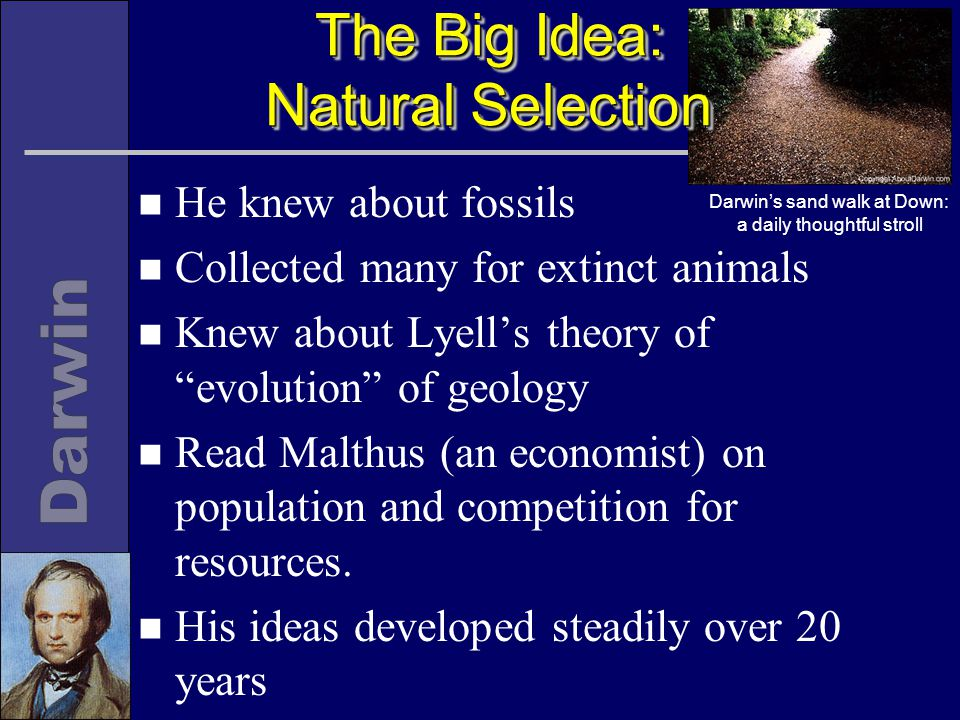 The Big Idea: Natural Selection n He knew about fossils n Collected many for extinct animals n Knew about Lyell's theory of evolution of geology n Read Malthus (an economist) on population and competition for resources.
