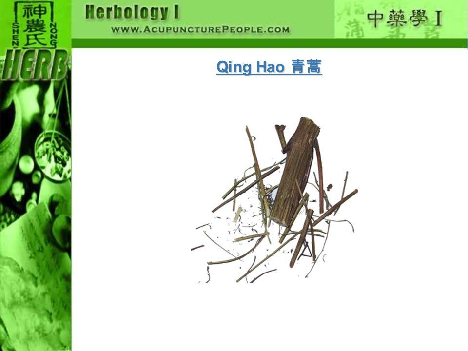 Qing Hao 青蒿