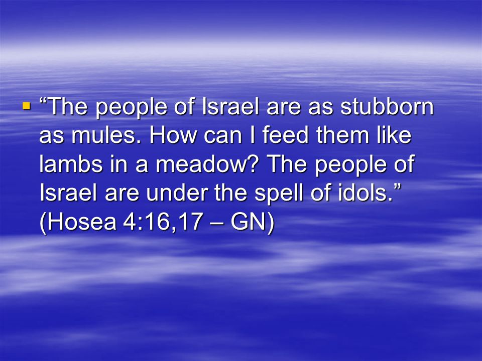 The people of Israel are as stubborn as mules. How can I feed them like lambs in a meadow.