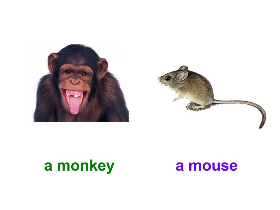 a monkeya mouse