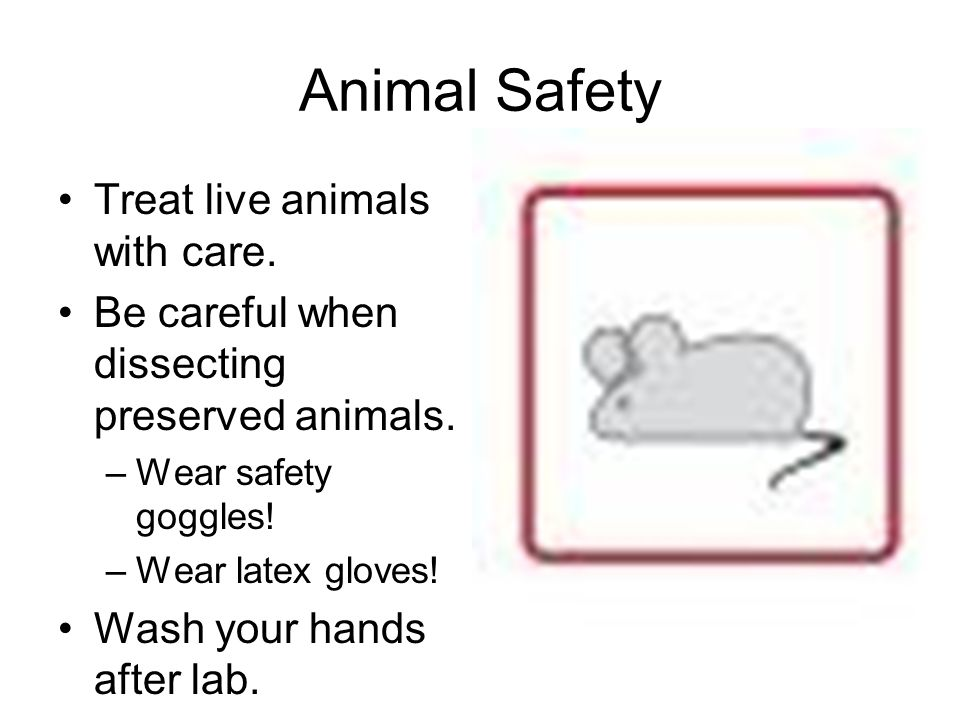 Animal Safety Treat live animals with care.Be careful when dissecting preserved animals.