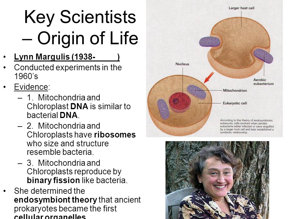Key Scientists – Origin of Life Lynn Margulis (1938- ) Conducted experiments in the 1960's Evidence: –1.