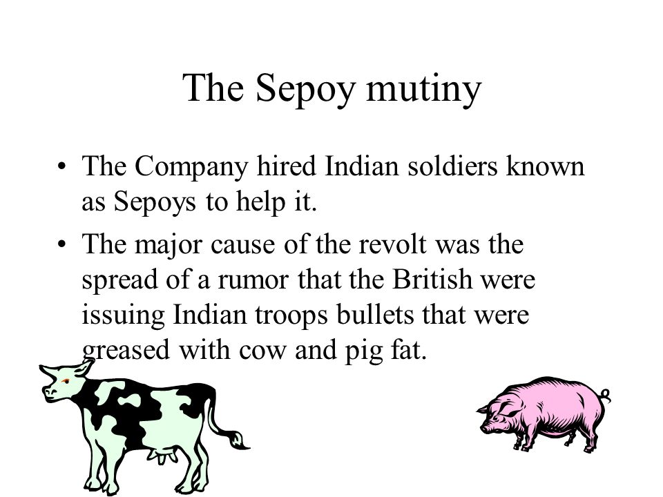 Cows were sacred to Hindu's Pigs could not be eaten by Muslims A group of seypoys refused to load their rifles, they were arrested and other Sepoys then rebelled against the British.