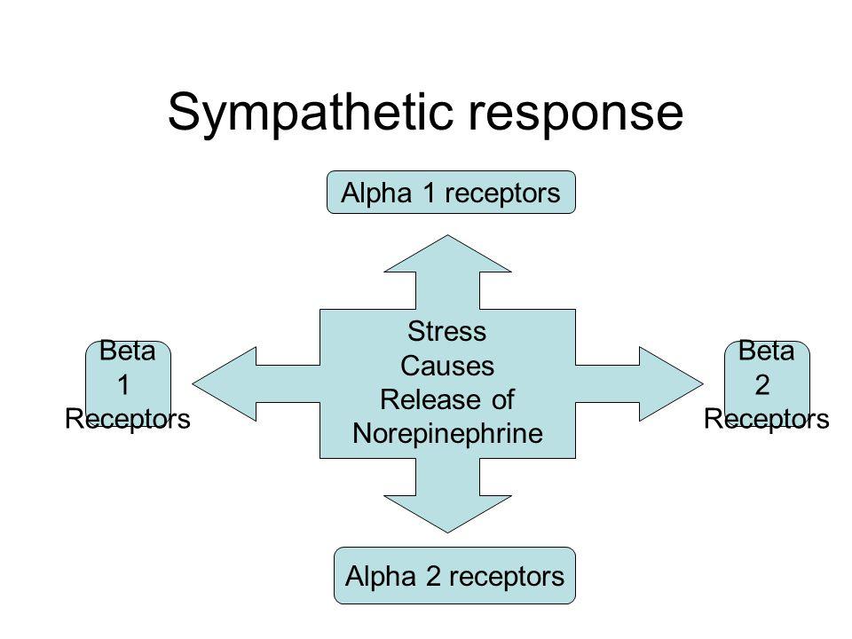 Sympathetic response Stress Causes Release of Norepinephrine Alpha 1 receptors Beta 1 Receptors Alpha 2 receptors Beta 2 Receptors