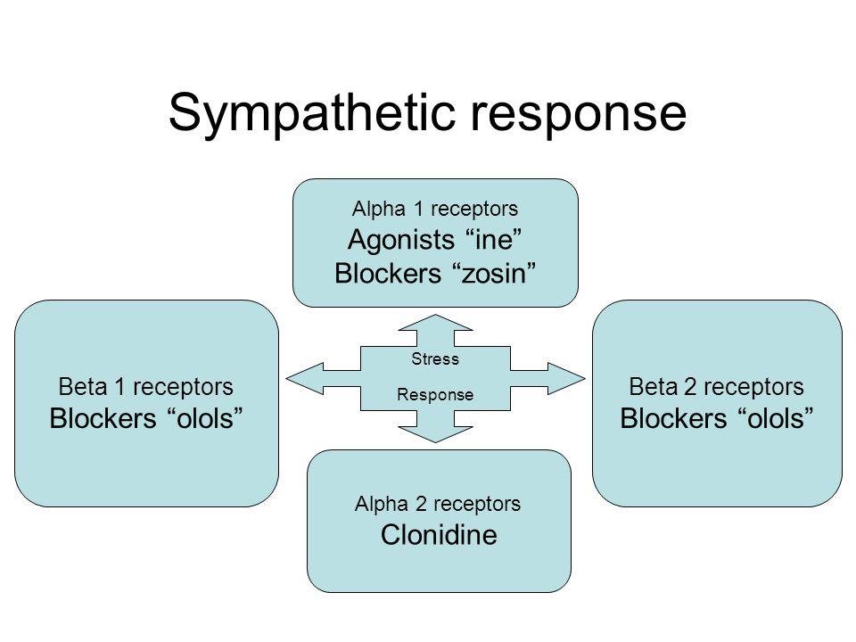 Sympathetic response Stress Response Alpha 1 receptors Agonists ine Blockers zosin Alpha 2 receptors Clonidine Beta 2 receptors Blockers olols Beta 1 receptors Blockers olols