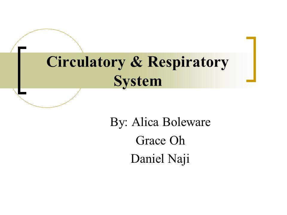 Circulatory & Respiratory System By: Alica Boleware Grace Oh Daniel Naji
