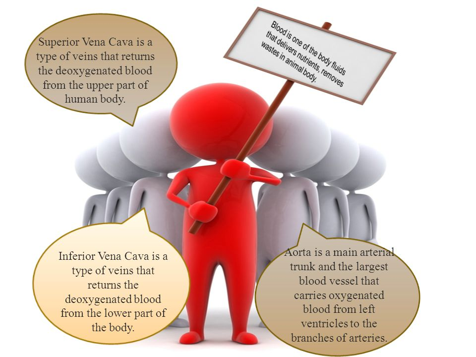 Inferior Vena Cava is a type of veins that returns the deoxygenated blood from the lower part of the body.