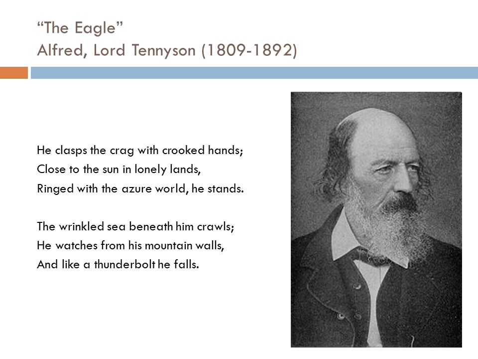 """""""The Eagle"""" Alfred, Lord Tennyson (1809-1892) He clasps the crag with crooked hands; Close to the sun in lonely lands, Ringed with the azure world, he"""