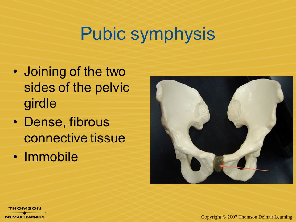 Pubic symphysis Joining of the two sides of the pelvic girdle Dense, fibrous connective tissue Immobile