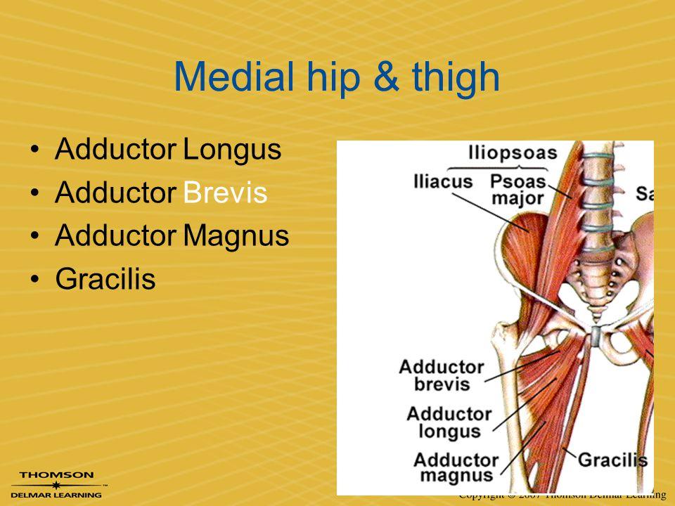 Medial hip & thigh Adductor Longus Adductor Brevis Adductor Magnus Gracilis