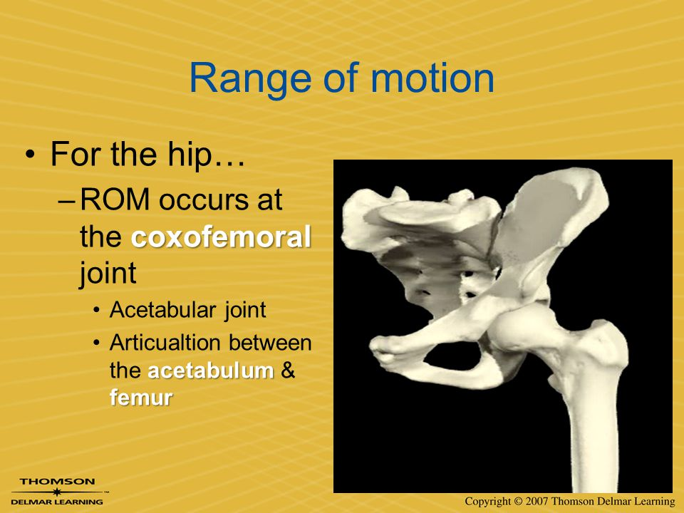 Range of motion For the hip… coxofemoral –ROM occurs at the coxofemoral joint Acetabular joint acetabulum femurArticualtion between the acetabulum & f