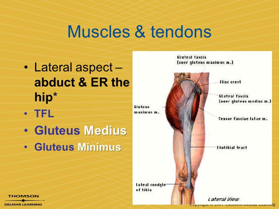 Muscles & tendons Lateral aspect – abduct & ER the hip* TFL MediusGluteus Medius MinimusGluteus Minimus
