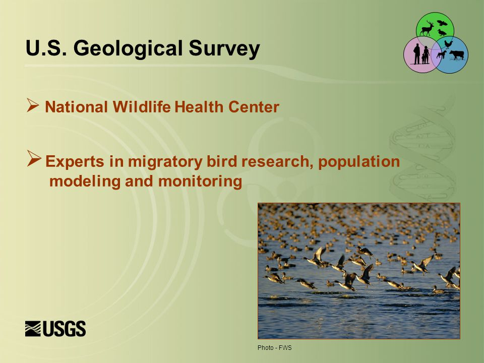  National Wildlife Health Center  Experts in migratory bird research, population modeling and monitoring U.S.