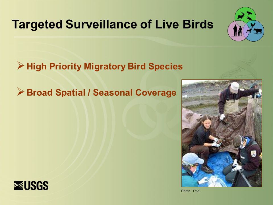  High Priority Migratory Bird Species  Broad Spatial / Seasonal Coverage Targeted Surveillance of Live Birds Photo - FWS