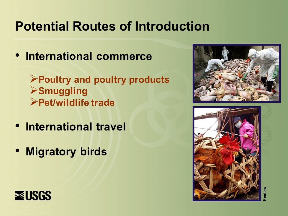International commerce  Poultry and poultry products  Smuggling  Pet/wildlife trade International travel Migratory birds Reuters Potential Routes o